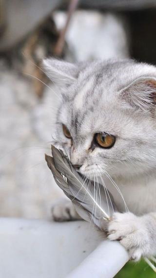 动物高清壁纸10272342 可爱猫咪 动物壁纸