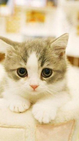 呆呆猫iPhone 5手机壁纸 可爱猫咪 动物壁纸