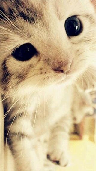 咪110293322 可爱猫咪 动物壁纸