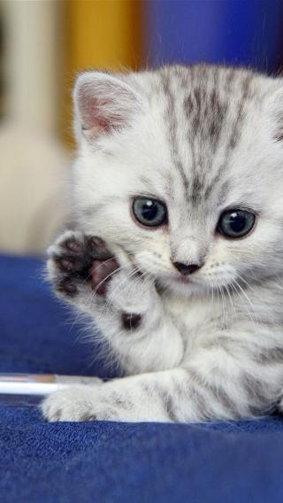 动物高清壁纸10279148 可爱猫咪 动物壁纸