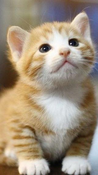 新猫3310290399 可爱猫咪 动物壁纸