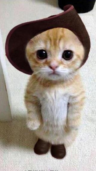 新猫4410290410 可爱猫咪 动物壁纸