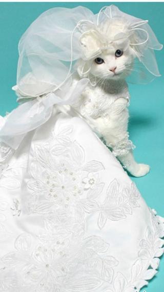 新猫510290371 可爱猫咪 动物壁纸
