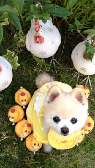 iPhone5壁纸 狗狗壁纸 动物壁纸