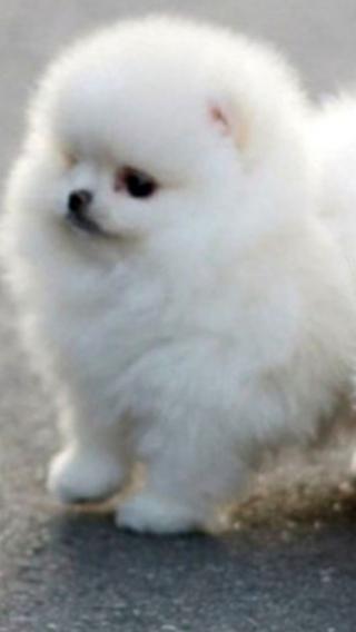新狗5910290366 狗狗壁纸 动物壁纸