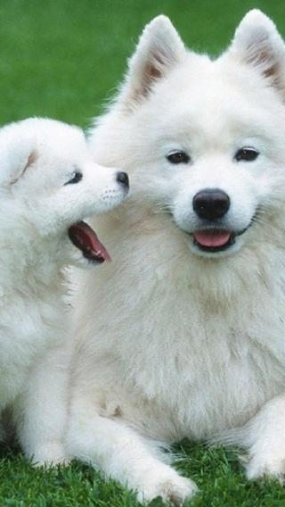 新狗5010290357 狗狗壁纸 动物壁纸