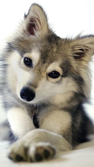 新狗1210290320 狗狗壁纸 动物壁纸