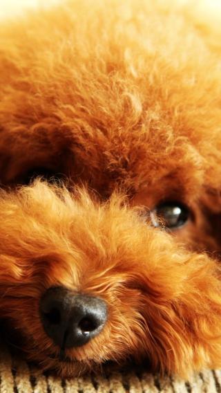 动物高清壁纸10270263 狗狗壁纸 动物壁纸