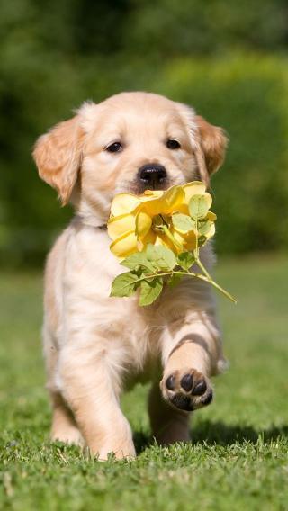 新狗3810290346 狗狗壁纸 动物壁纸