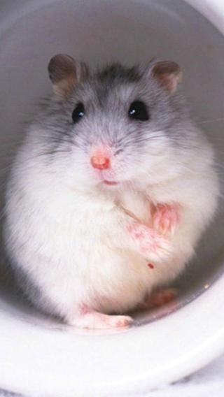 小可爱1010292049 其他动物 动物壁纸
