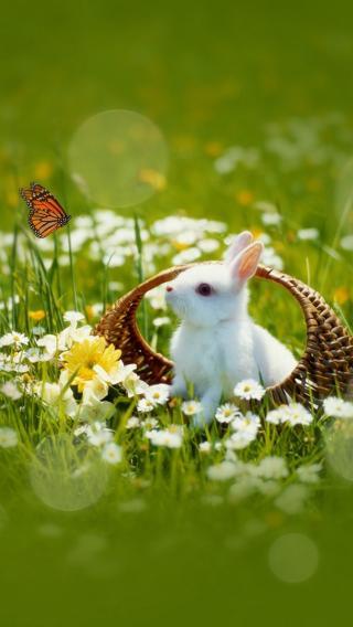 兔子 可爱 动物