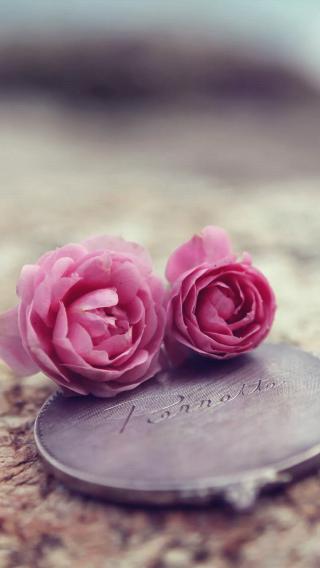 鲜花 爱情 粉色 浪漫
