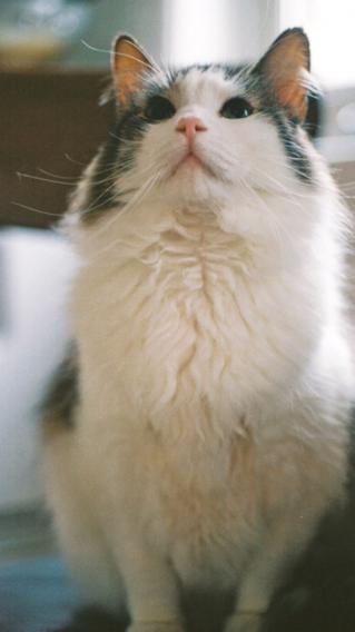 猫 动物 可爱 萌猫