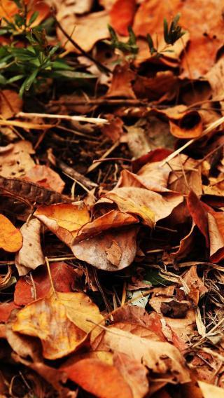 落叶 秋天 枯黄 季节