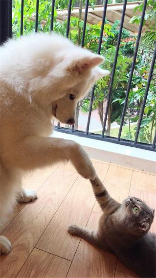 狗狗跟猫咪