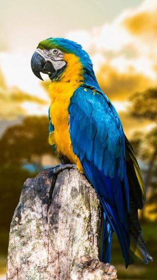 鹦鹉 色彩 羽毛 鸟