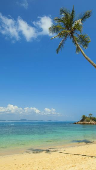 海滩 椰树 大海 碧海云天