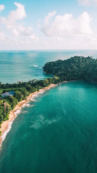 海洋 树林 大海 绿色
