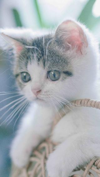 猫咪 喵星人 萌宠 可爱 白色