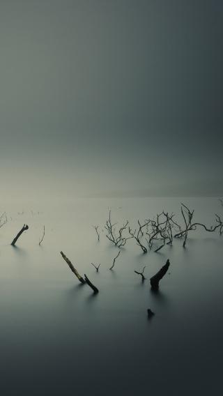 云雾迷幻 树枝 黑白 夜