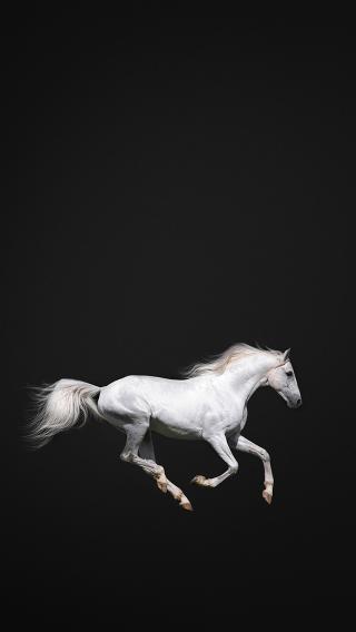 马 白驹 奔跑 骏马