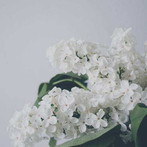 白色小花 纯洁 摆摄