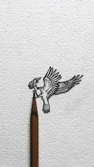鸟 绘画 动物 铅笔