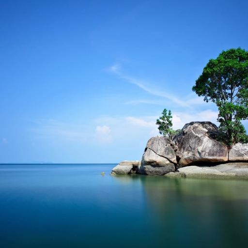 辽阔海洋 岩石 树木