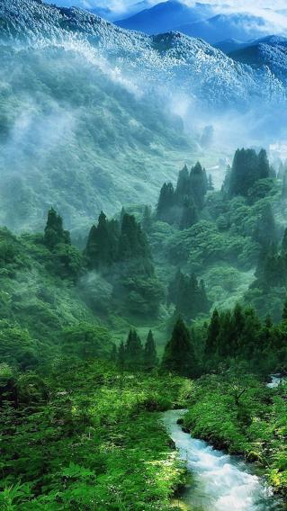 森林 大自然 河流 风景