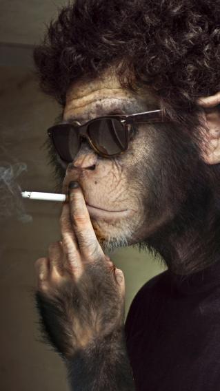 创意 猴子 抽烟