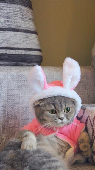 猫咪 可爱 宠物 呆萌 动物