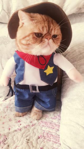 加菲猫 创意 服装 宠物