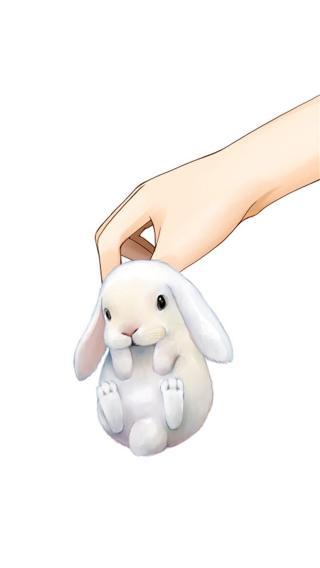 动物 萌宠 可爱 手 兔子