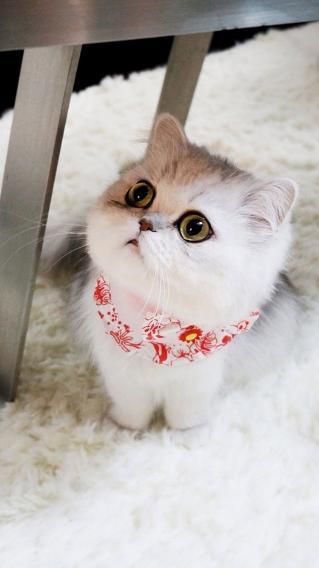 猫咪 可爱 呆萌 宠物