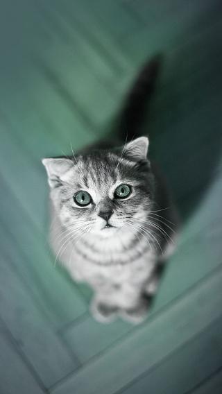 萌猫 猫咪 动物 小猫