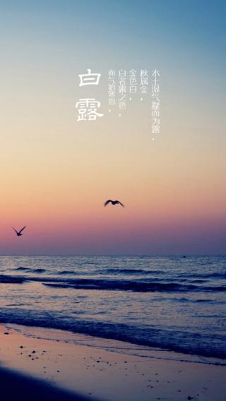 节气 白露 文字 海