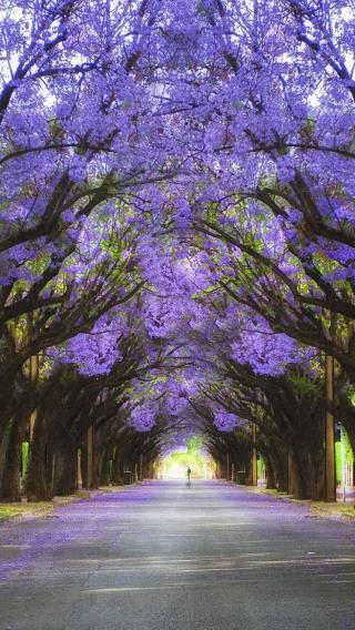 林荫 树 花 唯美