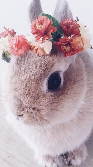 花环 兔子 毛茸茸