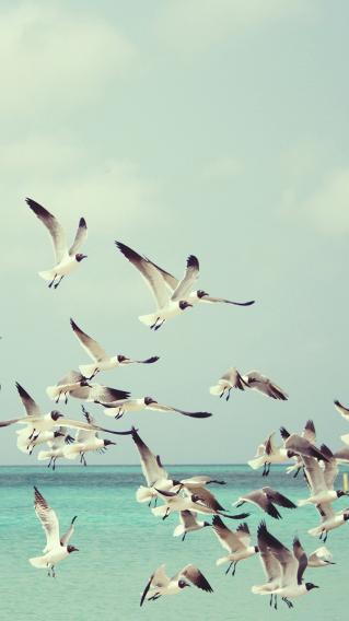 大海 飞鸟 海鸥