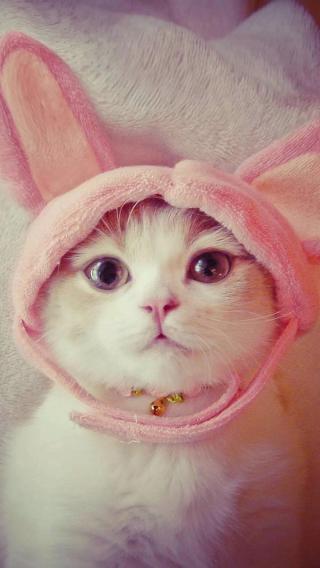 猫 粉色 兔耳朵 萌宠 喵星人
