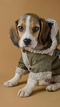 小狗 穿衣服 可爱