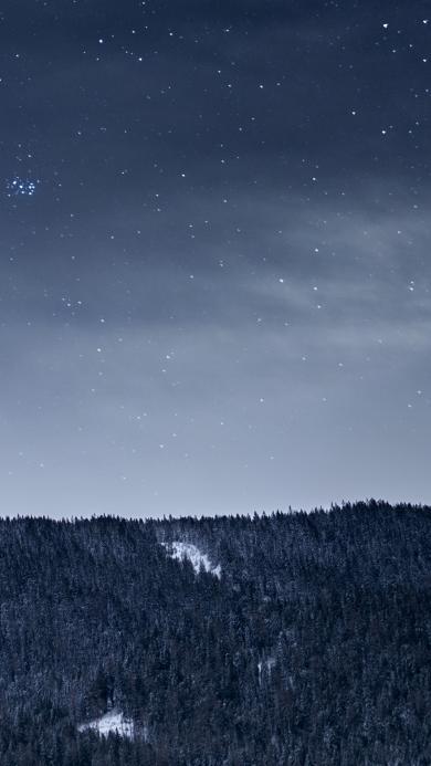 星空 树林 唯美 夜
