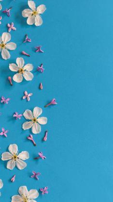 藍色背景 白色小花