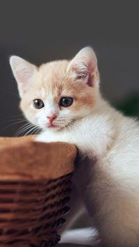 萌萌 小奶猫 动物 猫咪