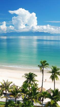 热带海边 椰树