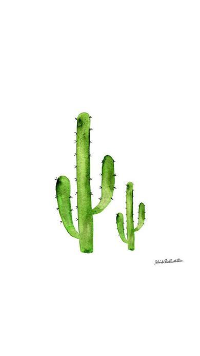 两颗仙人掌 水彩 植物 绿色