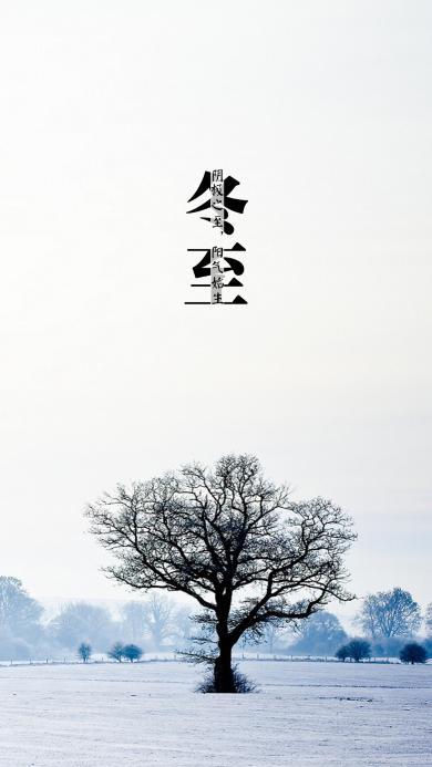 冬至 节气 年 雪地 树 枝 白色 冬天 寒冷
