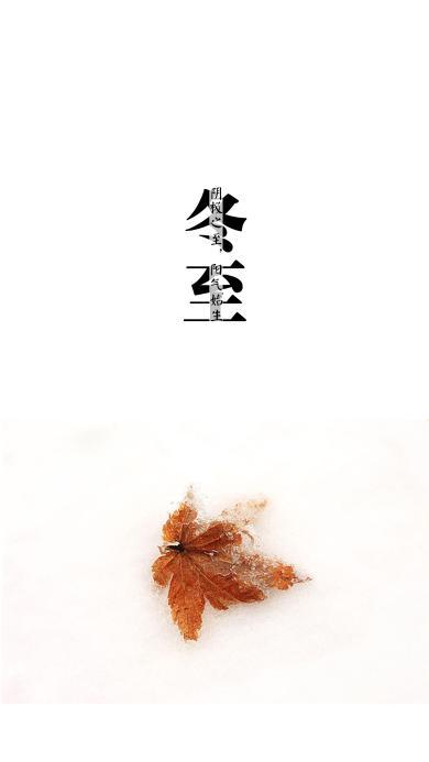 冬至 节气 落叶 黄色 枫叶 结冰 雪 凝固