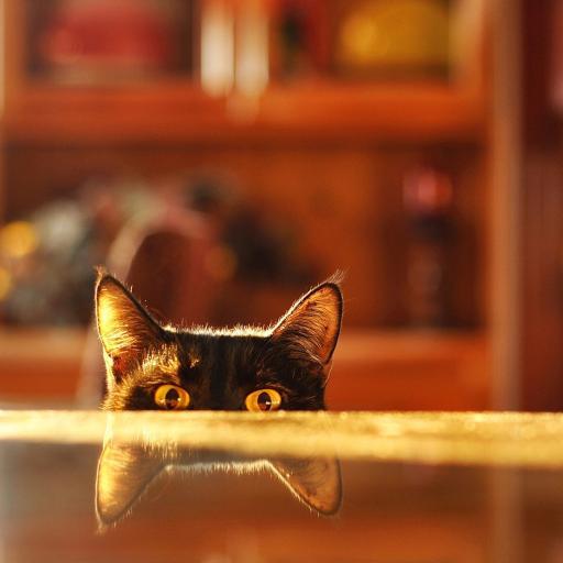 猫咪 喵星人 萌 黄色 耳朵 毛茸茸 可爱