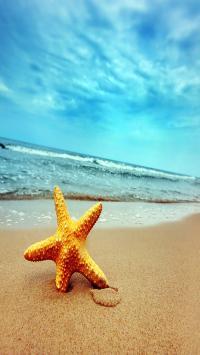 海星 沙滩 大海